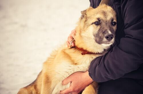 padrone-abbraccia-cane