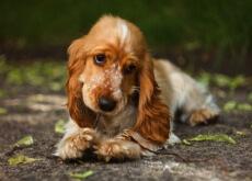 Benefici-della-cannella-nei-cani