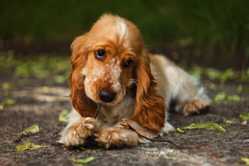 Sapevate che la cannella fa bene al cane?