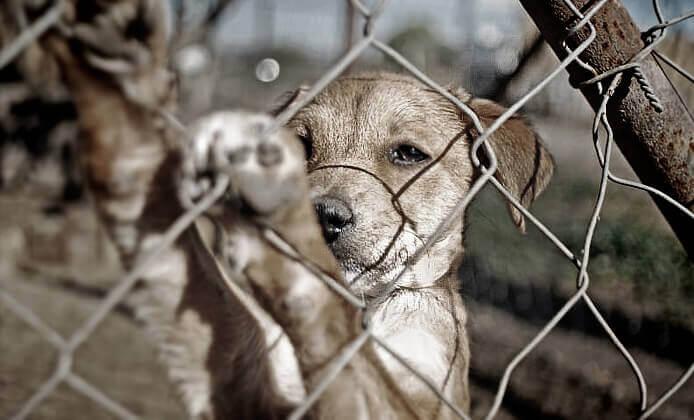 cagnolino in gabbia