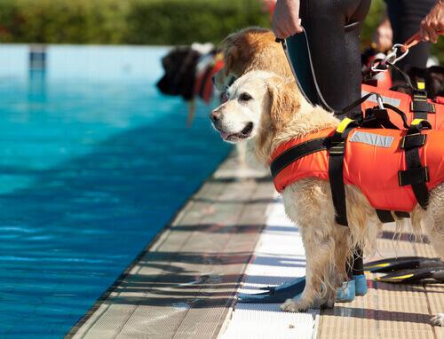 Perché è importante addestrare un cane?
