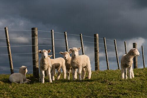 agnelli-fattoria