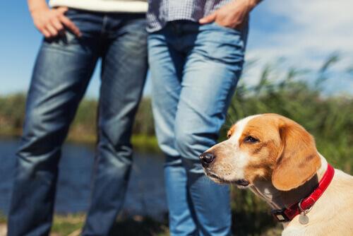 È vero che i nostri animali sono gelosi se abbiamo un partner?
