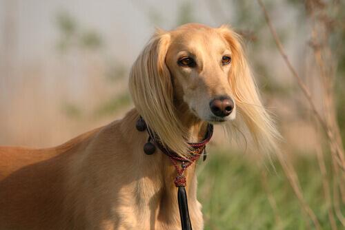 Secondo uno studio, le cagnoline sono più socievoli dei cagnolini