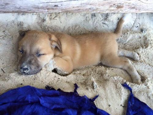 Turista tedesca adotta un cane randagio nelle Filippine
