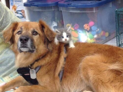 Cane sopravvisuto all'uragano Katrina aiuta i gatti randagi
