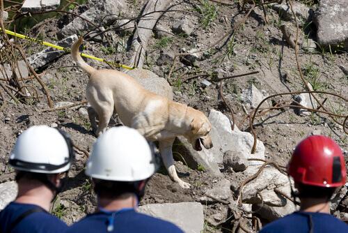 cane-che-aiuta-nei-soccorsi