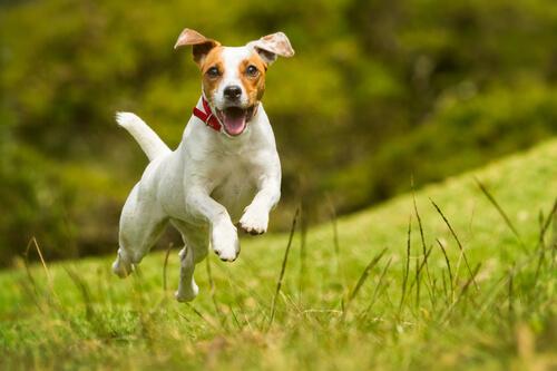 cane-che-salta-sul-prato