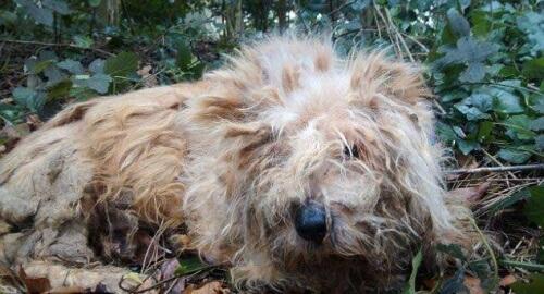 Trovato in Inghilterra un cane con tutte le ossa fratturate