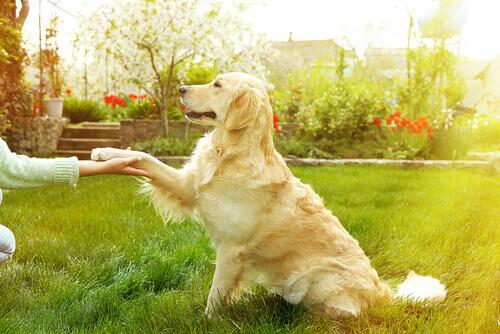 cane seduto porge la zampa