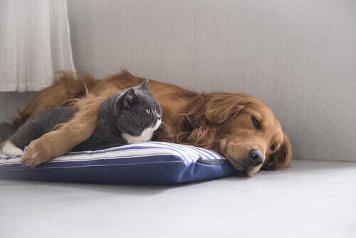 cane-gatto-abbracciati