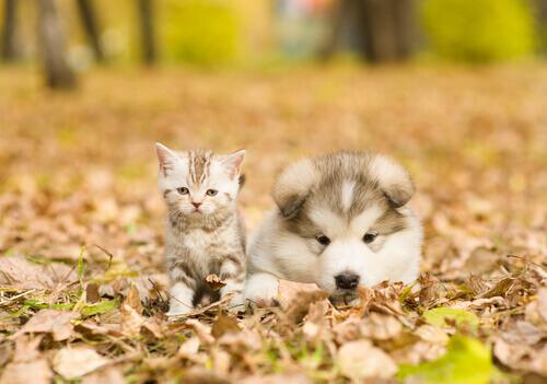 cani e gatti giocano insieme