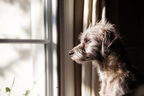 Eventi che il cane percepisce prima che accadano