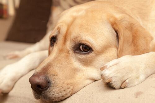 cane che non esce di notte