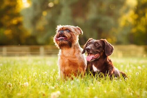Ecco perché ai cani piace prendere il sole