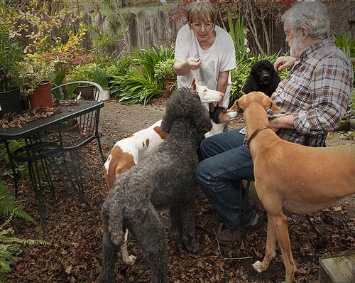 cani-che-dimostrano-il-loro-amore