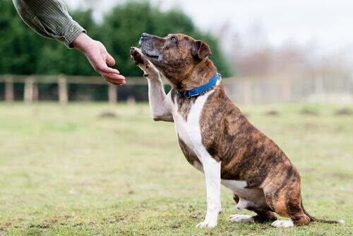 I cani sordi possono imparare il linguaggio dei segni