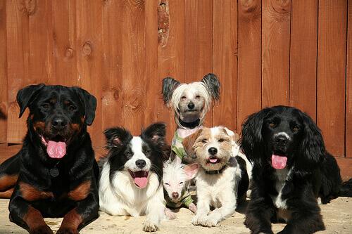 cani con manie