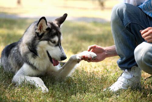 divertirsi-con-il-cane