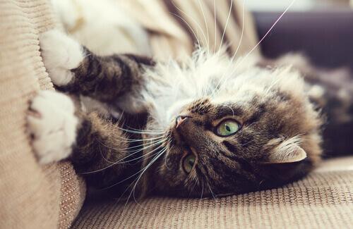 gatto che graffia i mobili