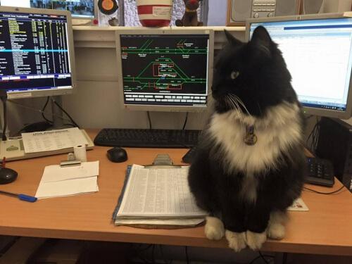 Felix, il gatto che lavora alla stazione dei treni