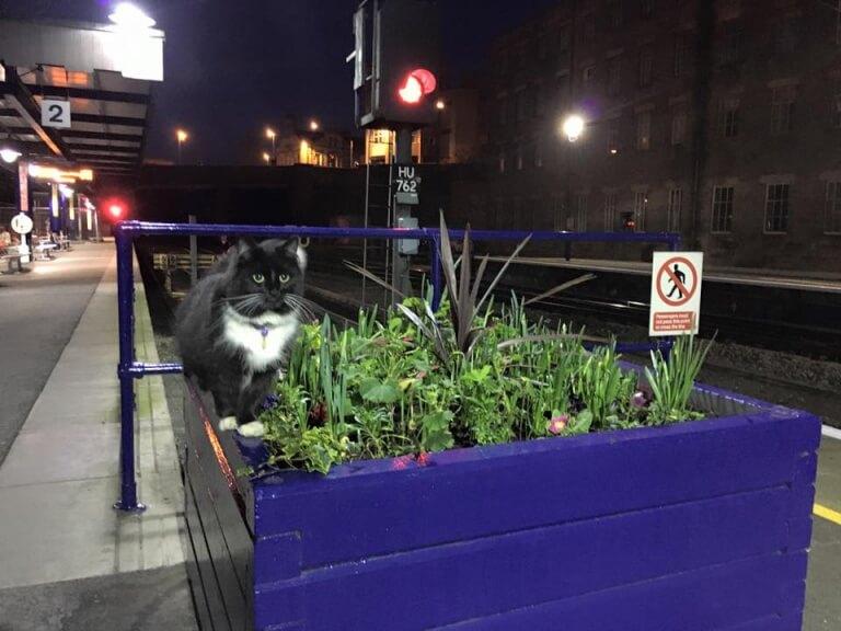 gatto-felix2