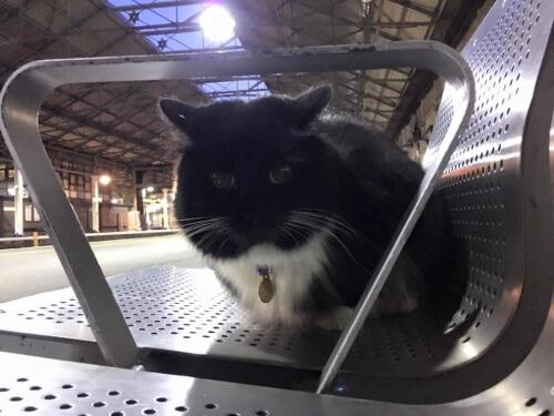 gatto-felix3