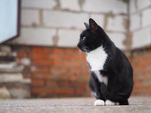 gatto-in-strada