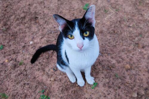 Una famiglia tedesca sotto Natale ritrova il gatto smarrito 7 anni prima