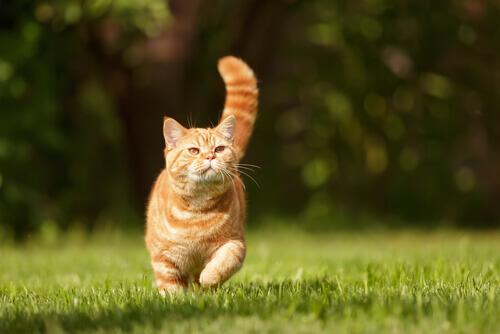 gatto-rosso-prato