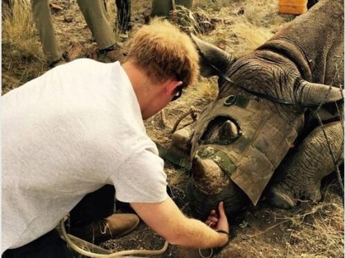 Il principe d'Inghilterra salva i rinoceronti
