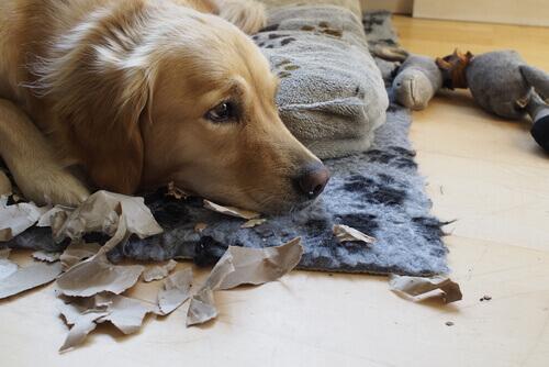 il-cane-quando-rimane-solo-fa-disastri