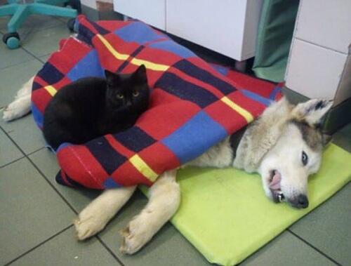 Radamenes: il gatto che si prende cura degli altri animali