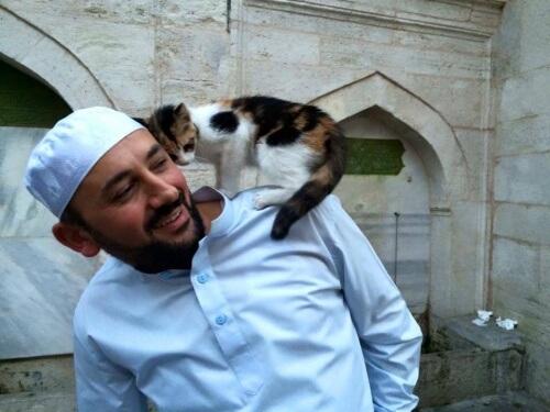 i gatti randagi dell'imam di Istambul