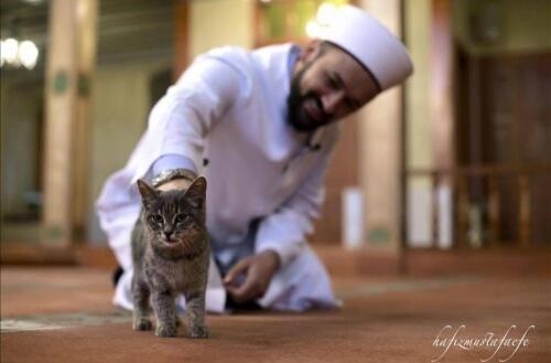 Imam di Istambul apre la sua moschea ai gatti randagi