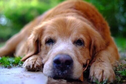 rimedi-naturali-per-calmare-il-cane
