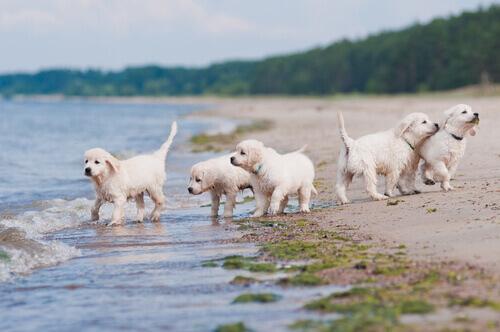 socializzazione-cucciolo
