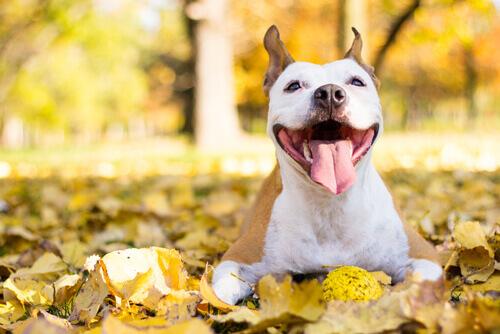 vita-felice-con-il-vostro-cane