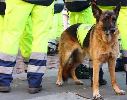 Muore Attila, uno dei migliori cani salvavita in Europa
