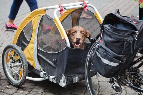 Cane che attraversò in bici il Perù