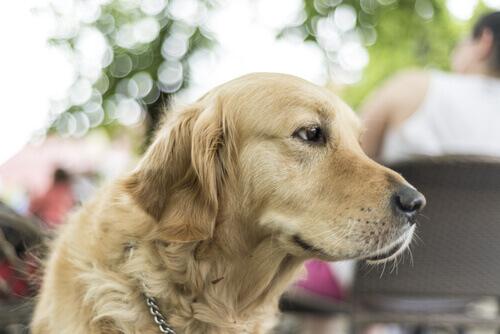 5 motivi per vivere con un cane di taglia grande