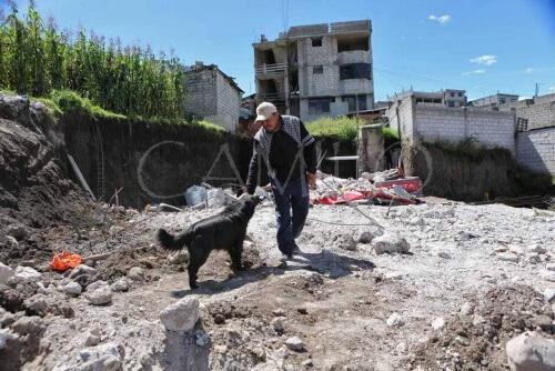 Cane tra rovine del terremoto