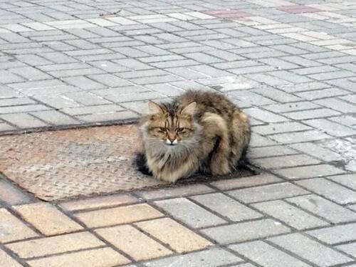Gatto abbandonato aspetta il padrone per più di un anno