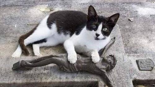 Gatto visita tomba del padrone