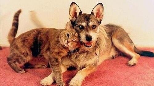 L'incredibile storia di Ginny, la cagnolina che salvava i gatti