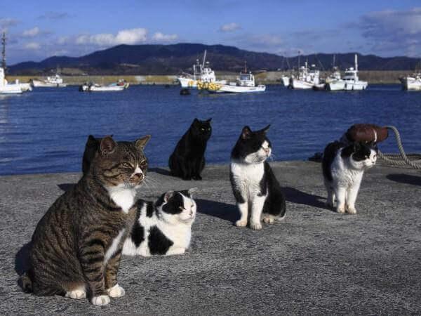 Isola dei gatti: ricevute tantissime donazioni di cibo