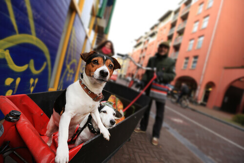 Olanda, un paese senza cani randagi
