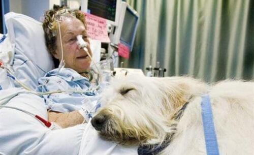 Ospedale canadese permette l'ingresso agli animali