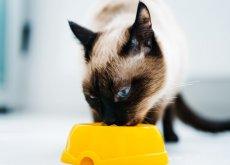 alimenti-che-il-vostro-gatto-adorerà