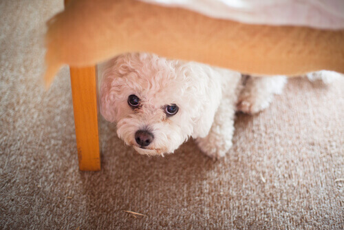 Le malattie psicologiche più comuni nei cani